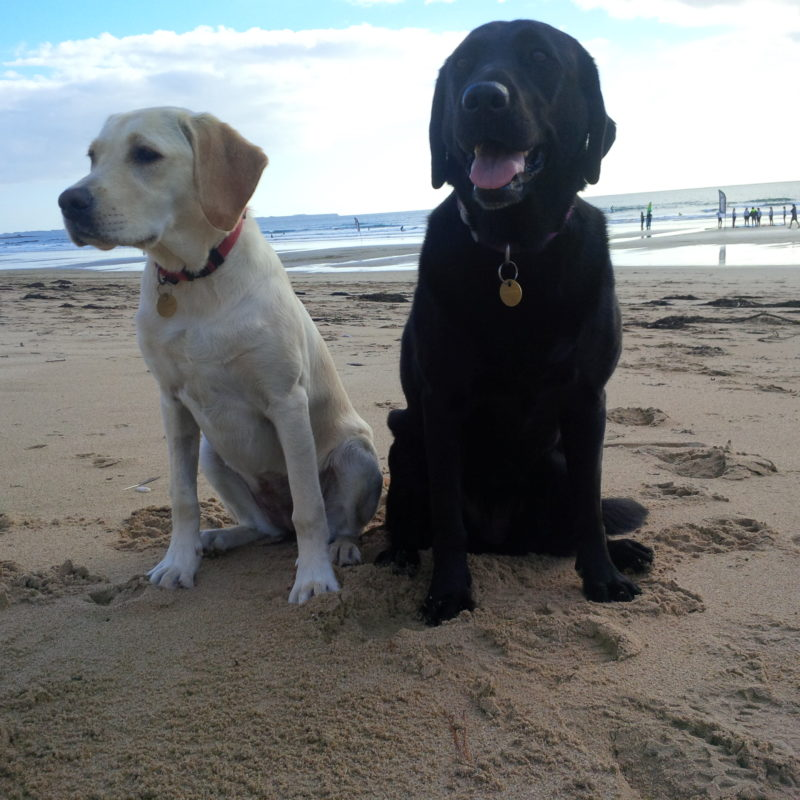 promenade chiens plage