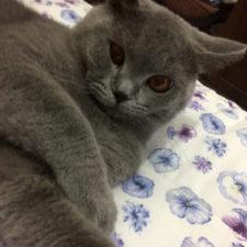 chat sur lit