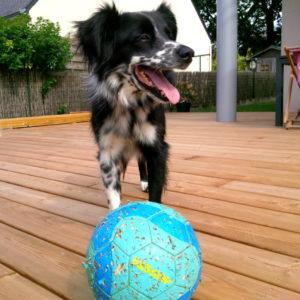 jeu de ballon avec un chien au cours d'une garde à domicile sur Lorient